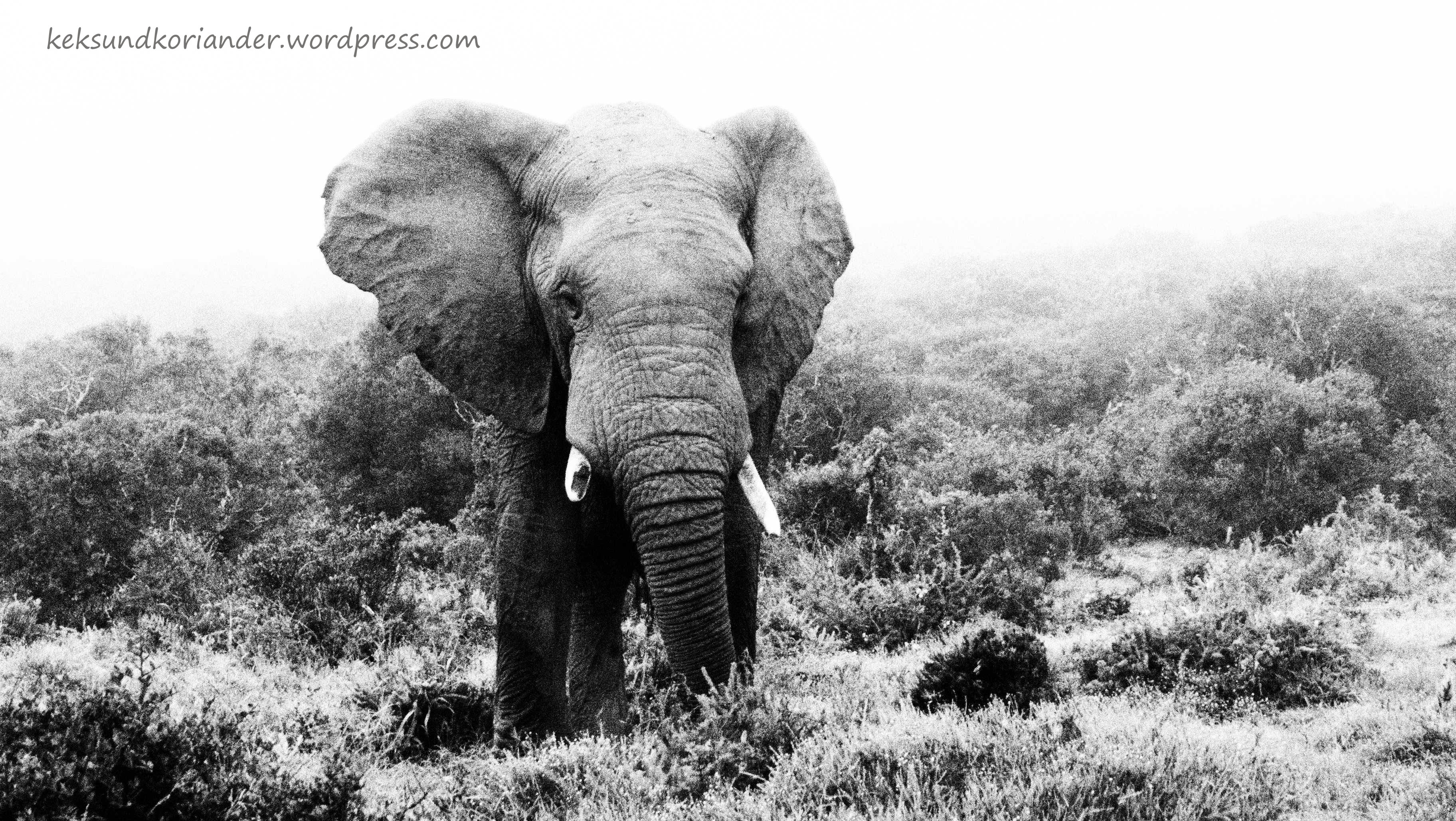 Addo Elephant National Park Südafrika