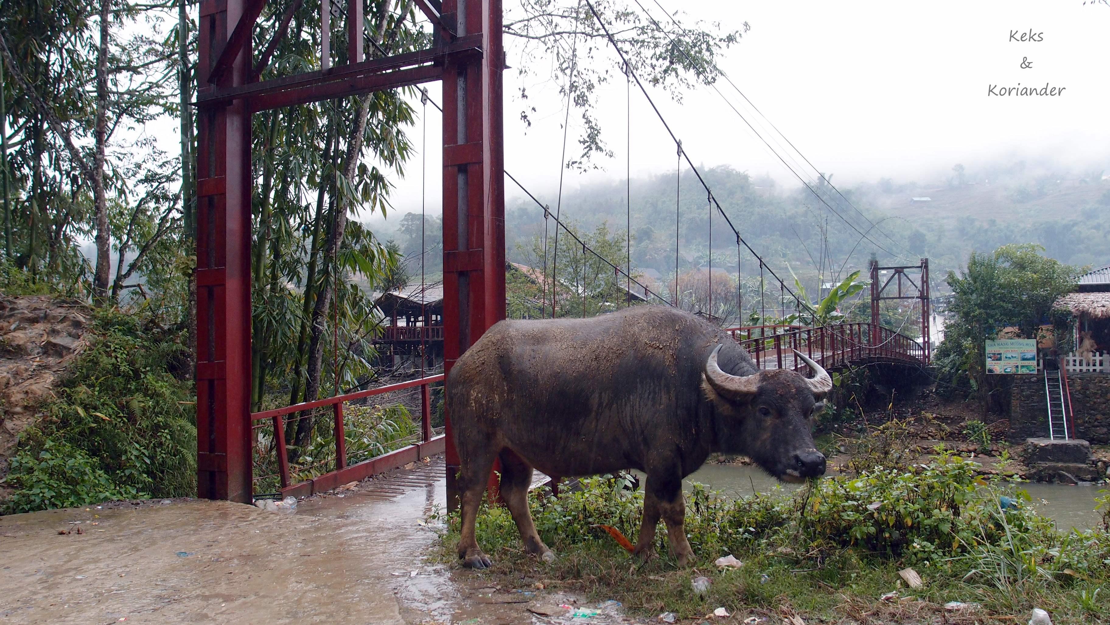 Vietnam Sapa Wandern Wasserbüffel