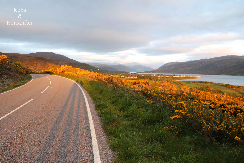 Schottland Küste Ullapool Ginster