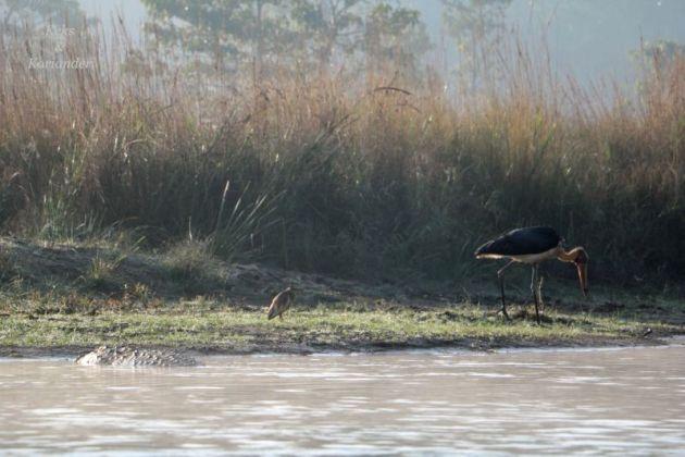 krokodil-fluss-chitwan-nationalpark-nepal